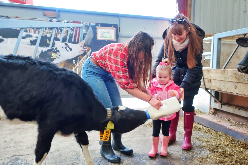 Feeding a calf at Mrs Dowson's